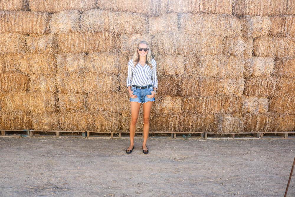 Saint Bernard: Ideal Travel Wear